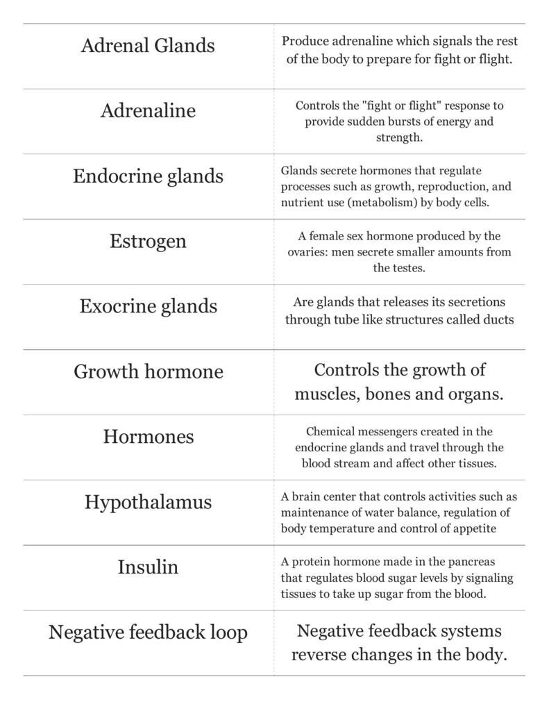 Print › Endocrine System | Quizlet