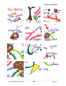 Nitrogen cycle jigsaw