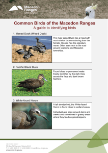 Common Birds of the Macedon Ranges