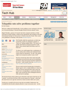 Telepathic rats solve problems together