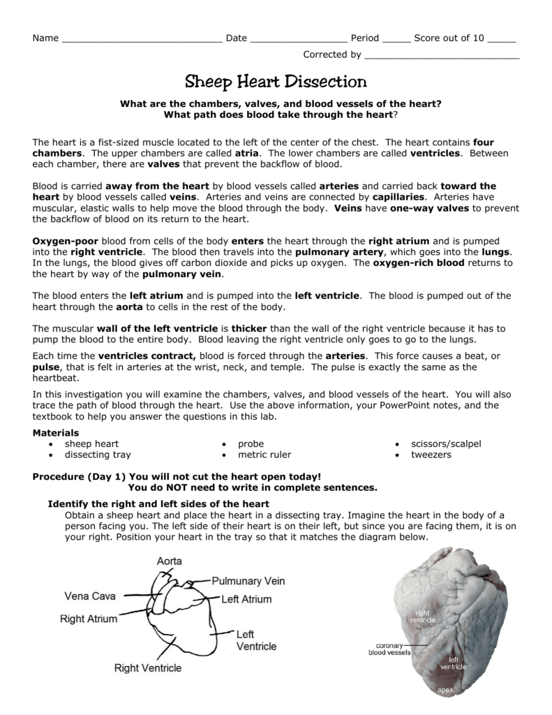 Worksheets Sheep Heart Dissection Lab 008670029 1 cca129a6fdb6a8b1aeaf68a06aefa216 png