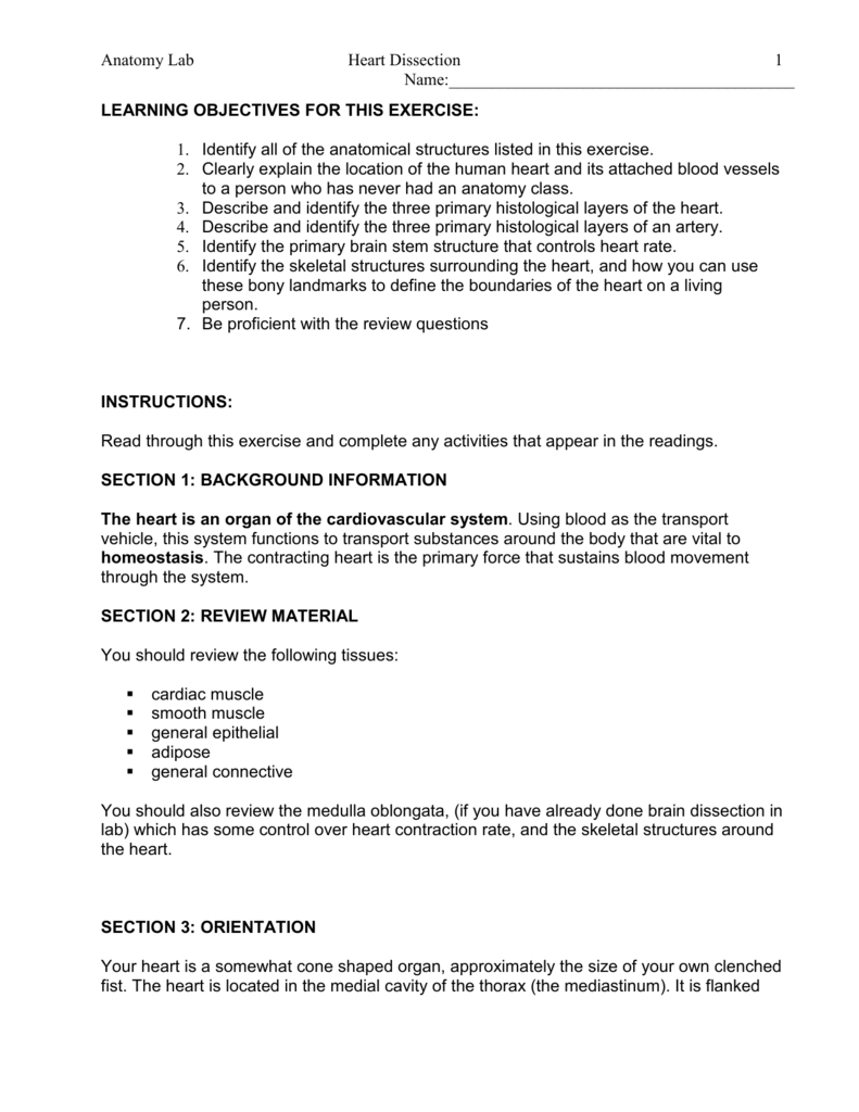 Anatomy Lab Heart Dissection Name 1 LEARNING OBJECTIVES – Sheep Heart Dissection Worksheet