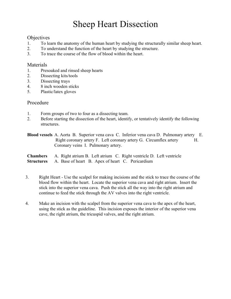 worksheet Sheep Heart Dissection Worksheet 008670041 1 b47af500b50e1322a27ea88233a0c028 png