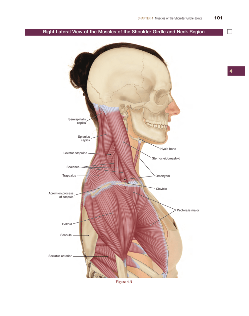 To View Sample 1 Internal Pages From The Muscular