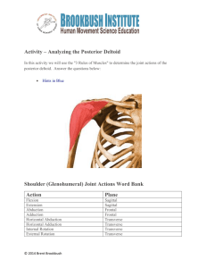 Activity – Analyzing the Posterior Deltoid