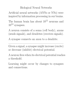 Biological Neural Networks Artificial neural networks (ANNs or NNs