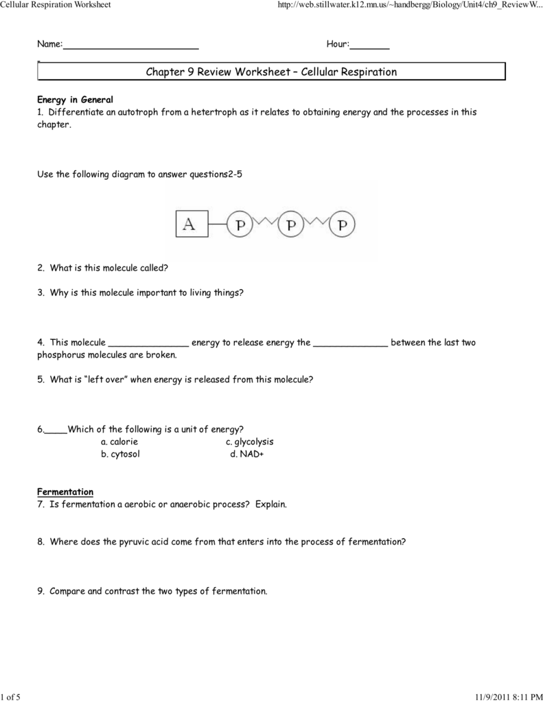 worksheet Chapter 9 Energy In A Cell Worksheet 2 cellular respiration worksheet