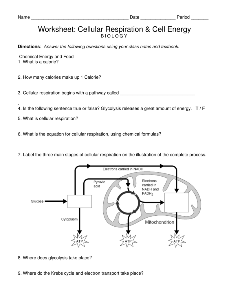 Worksheet Cellular Respiration And Cell Energy