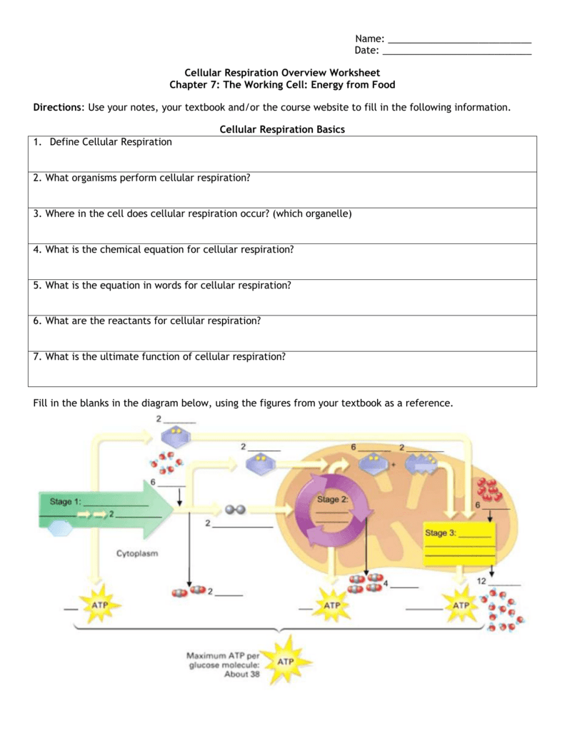Uncategorized. Cellular Respiration Worksheet Answer Key ...