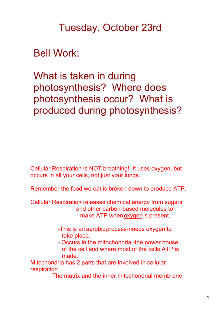 Bell Work What Is Taken In During Photosynthesis Where Does