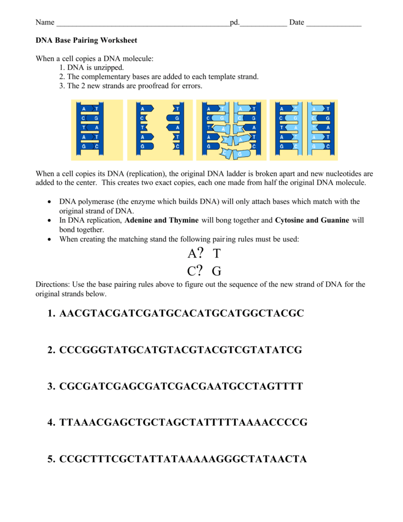 DNA base pairing Worksheet