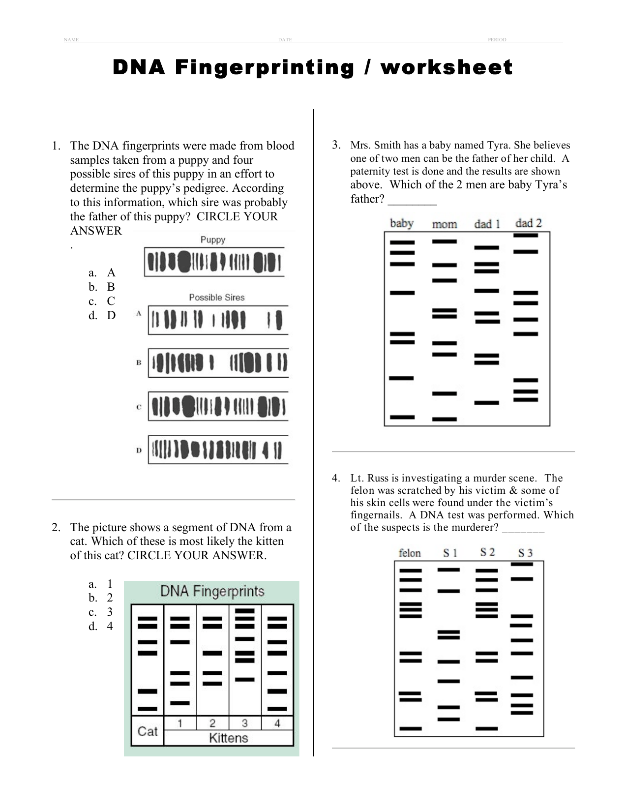DNA Fingerprinting / worksheet