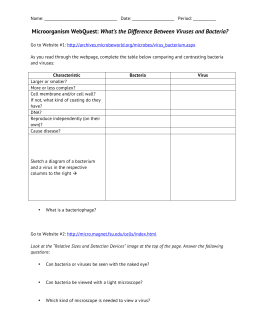 10: Bacteria Structure Worksheet