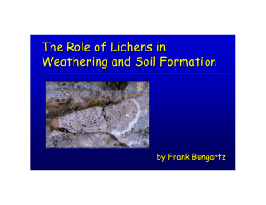 The Role of Lichens in Weathering and Soil Formation