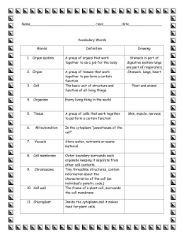 answer key: cells vocabulary graphic organizer