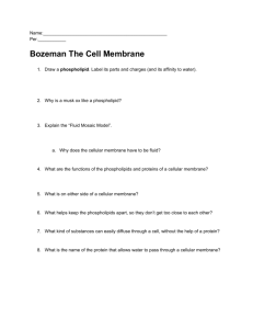 Bozeman The Cell Membrane - Biology with Mrs. Begert