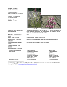 Linaria maroccana - Council for Watershed Health