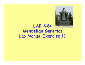 LAB #6: Mendelian Genetics Lab Manual Exercise 13
