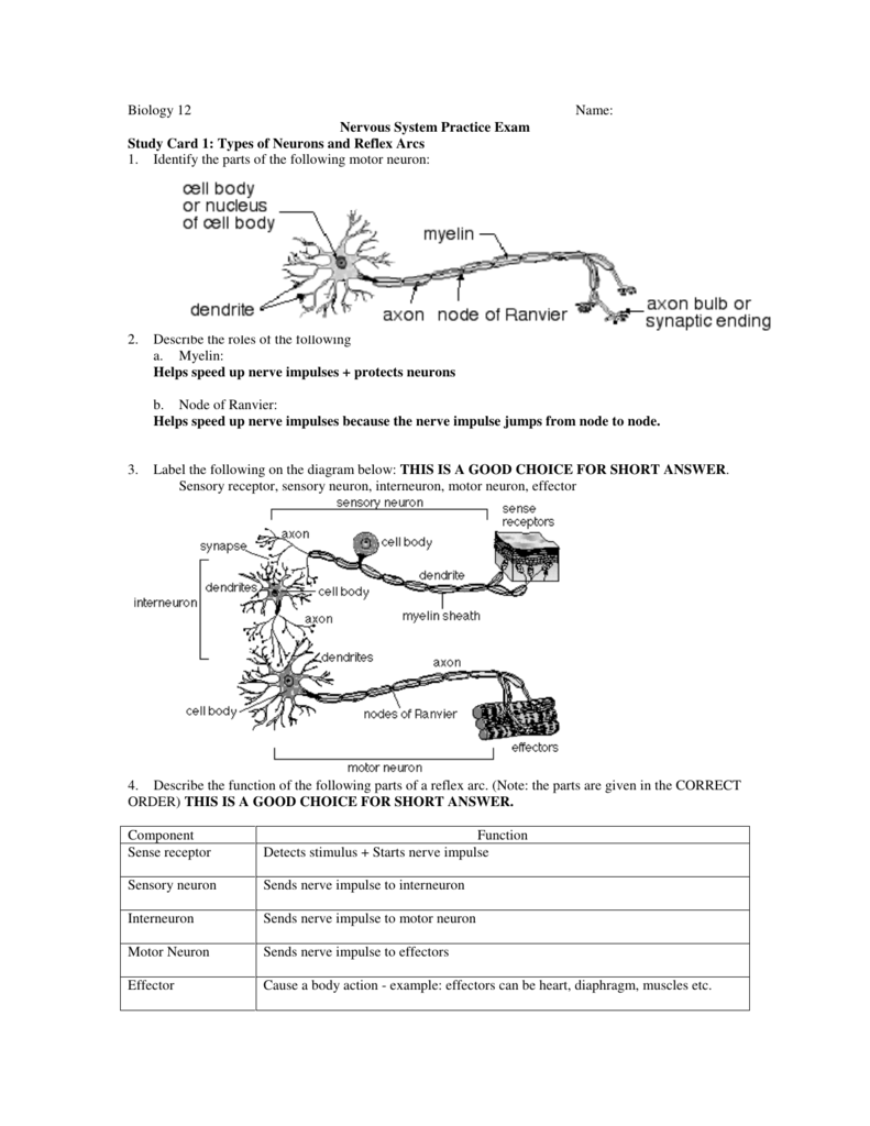 Biology 12 name nervous system practice exam study ccuart Images