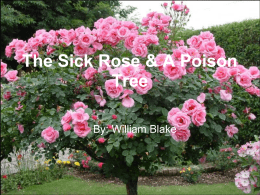 The Sick Rose & A Poison Tree