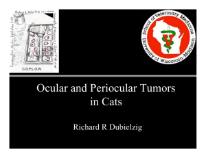 Ocular And Periocular Tumors In Cats