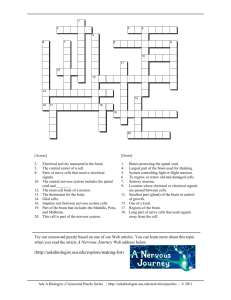 A Nervous Journey - Crossword Puzzle
