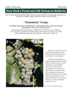 Traminette' is a late mid-season white wine