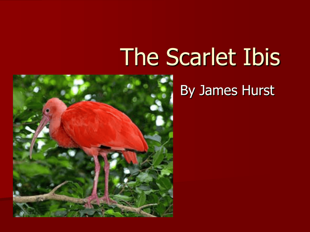 The Scarlet Ibis Notes