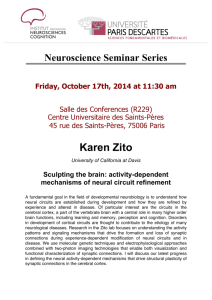 Karen Zito - The Institute of Neuroscience and Cognition