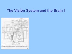 The Vision System and the Brain I