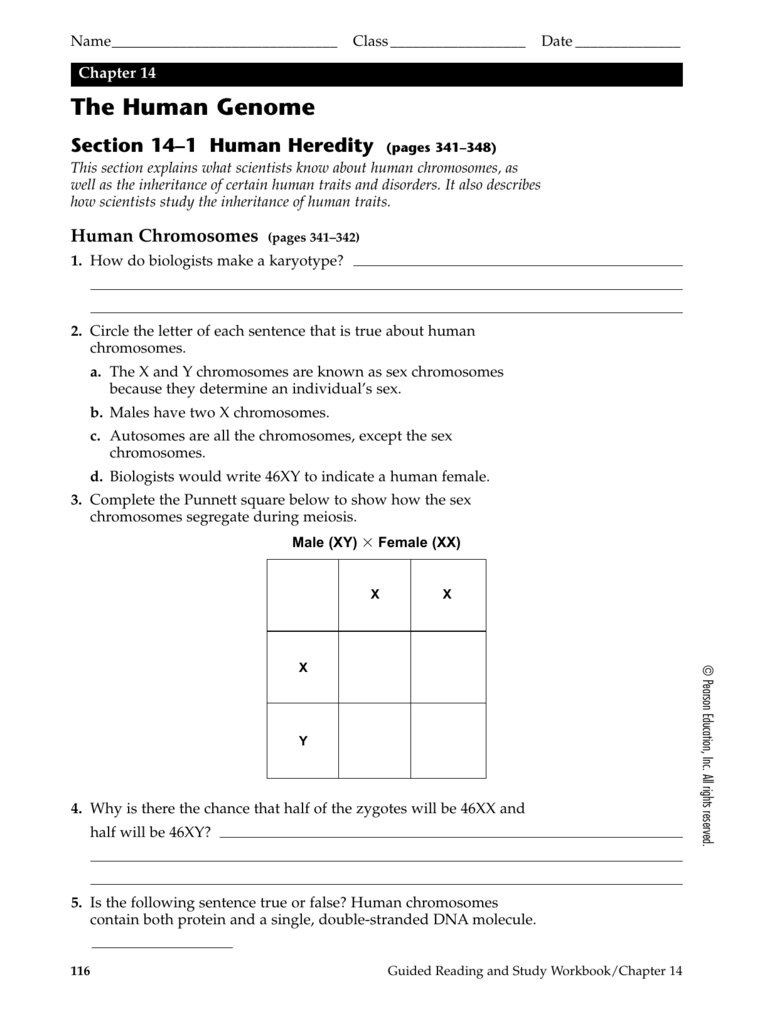 worksheet Section 14 2 Human Chromosomes Worksheet Answers chapter 14 the human genome se