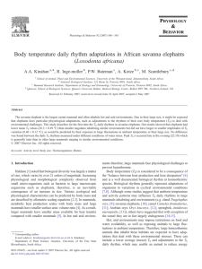 Body temperature daily rhythm adaptations in African savanna