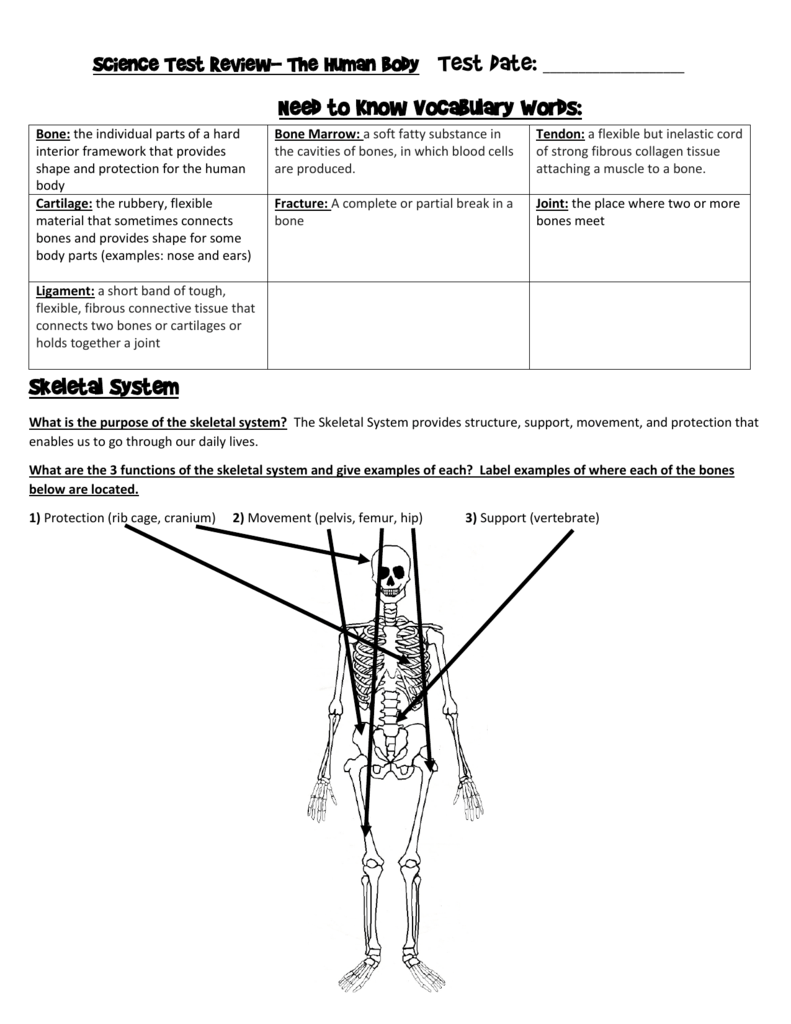 Need To Know Vocabulary Words Skeletal System