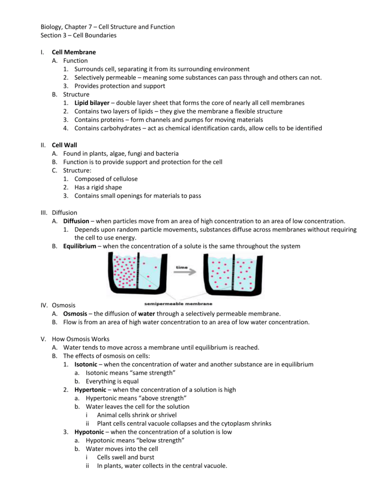 chapter 7 cell structure and function