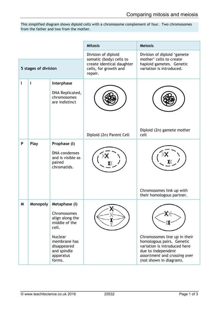 Paring Mitosis And Meiosis. 00874238519fcc24c9ee9513a9b9eedc8f7d11061c. Worksheet. Worksheet On Paring Mitosis And Meiosis At Mspartners.co