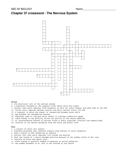Ch. 37 crossword - The Nervous System