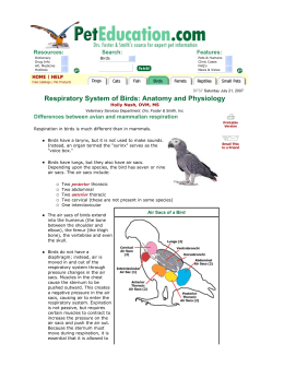 Respiratory System of Birds: Anatomy and Physiology