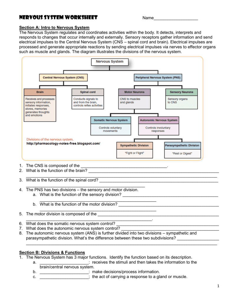 Worksheets Nervous System Worksheet nervous system worksheet jackson county faculty sites