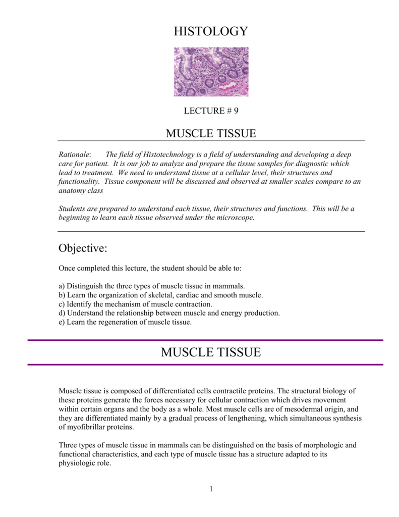 Histology Muscle Tissue