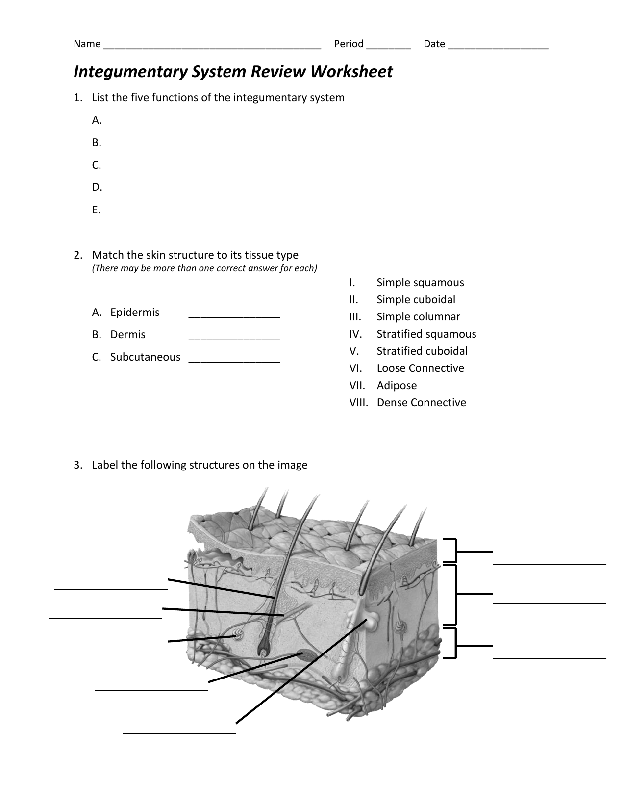 Integumentary System Review Worksheet – Integumentary System Worksheets