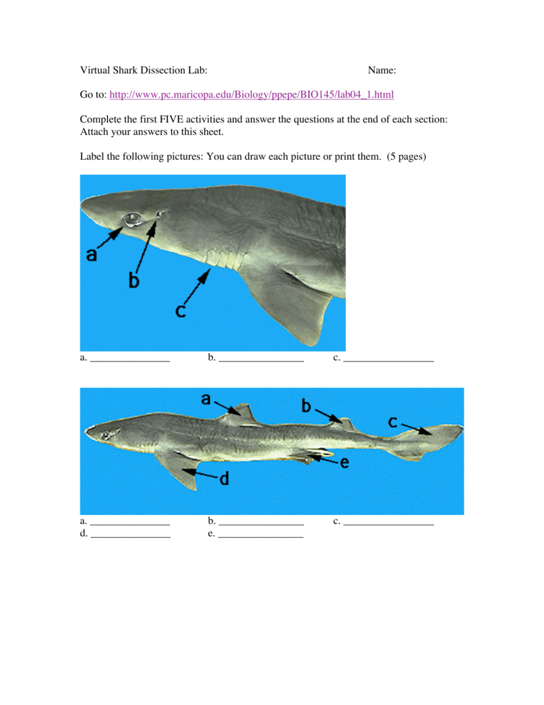 Virtual Dogfish Shark Dissection Lab Manual - Open Source User Manual •