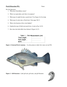 Perch Dissection WS: