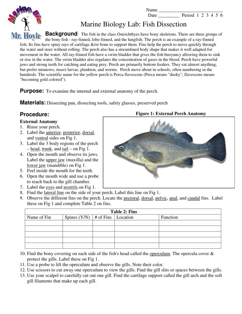 Marine Biology Lab Fish Dissection
