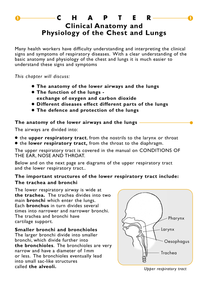 Clinical Anatomy And Physiology Of The Chest And Lungs