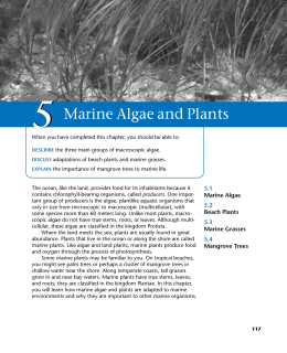 05/Marine Algae and Plants