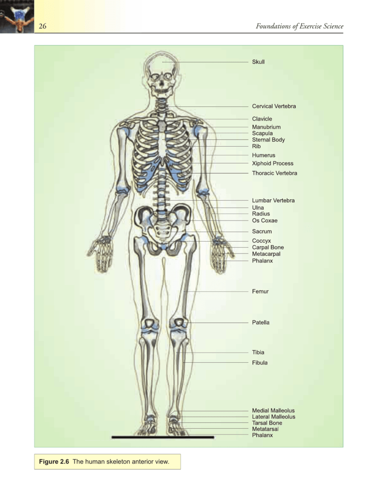 Human Anatomy The Pieces Of The Body Puzzle