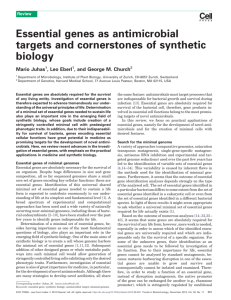 Essential genes as antimicrobial targets and cornerstones of
