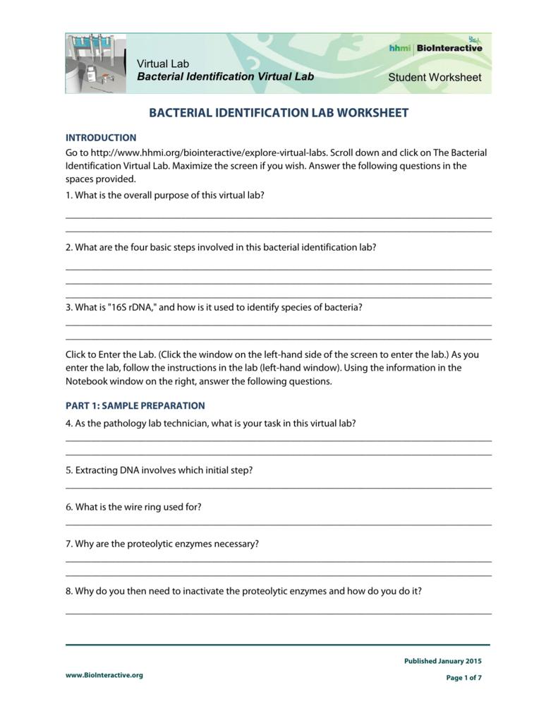 bacterial identification lab worksheet
