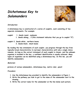 Dichotomous Key to Salamanders