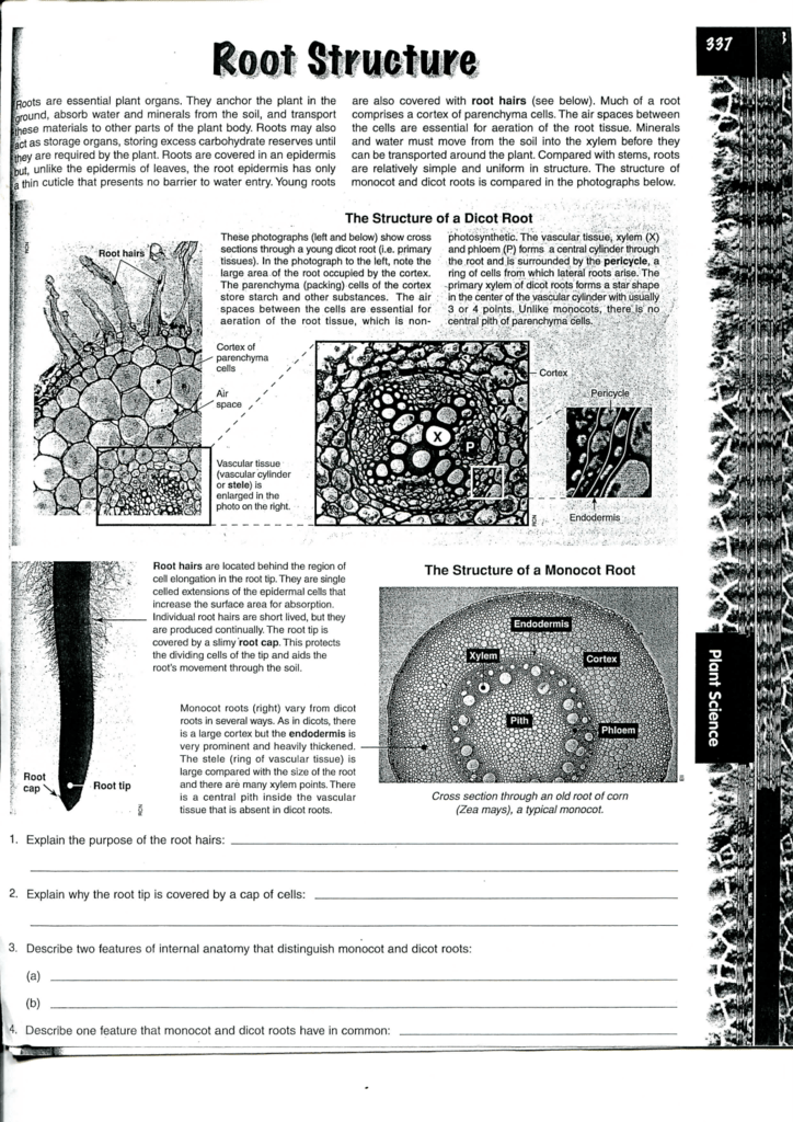 The Structure Of A Monocot Root